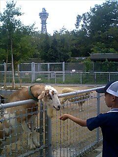 理想的なやぎ飼育法